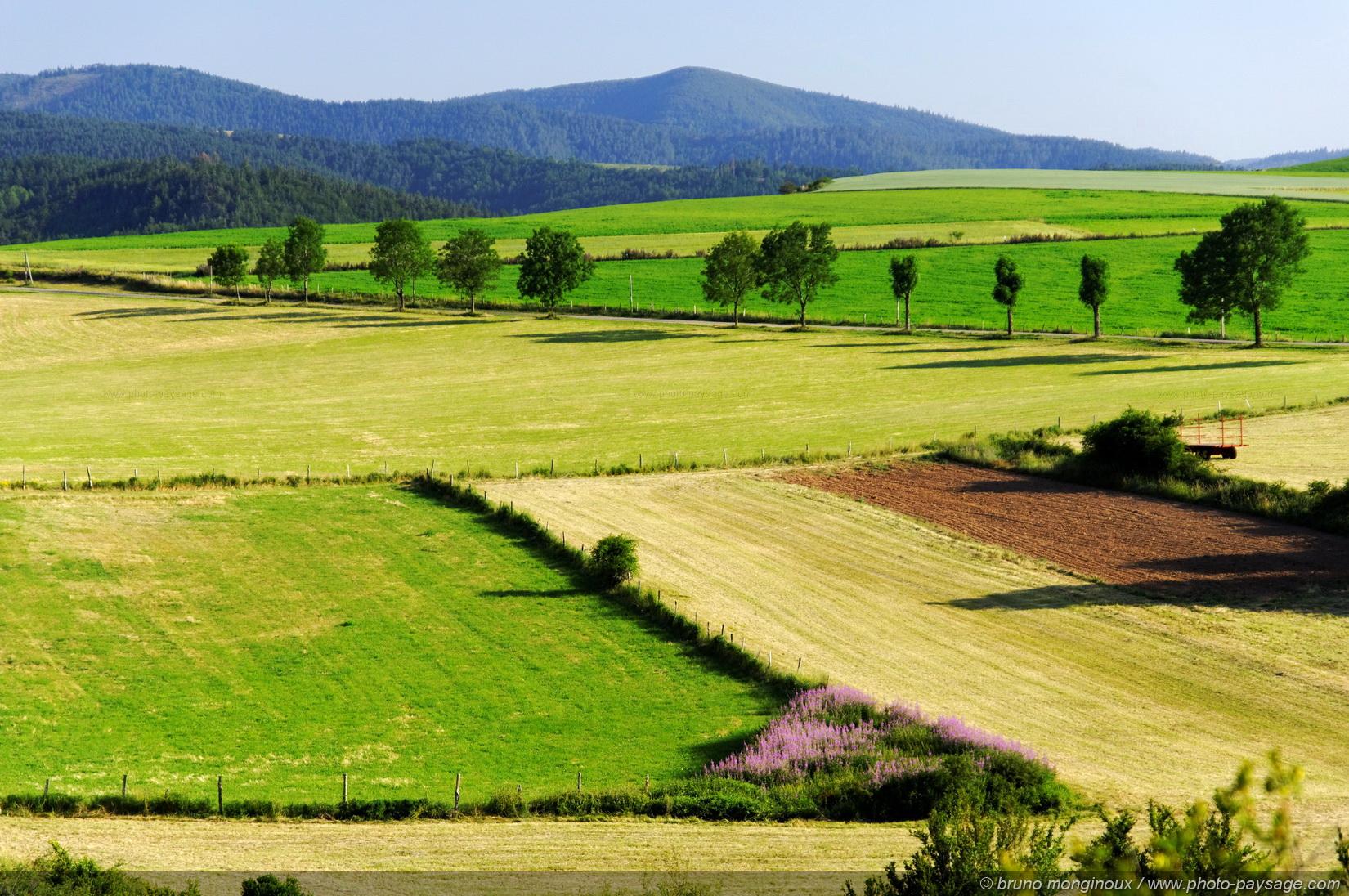 La valeur des terres agricoles