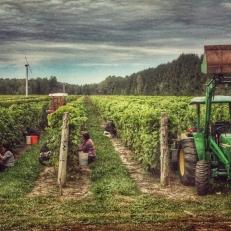 Aventure vinicole