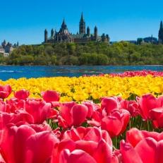 Un Monde de Tulipes