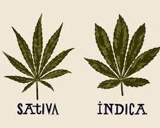 Cours sur le cannabis