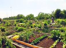 Un beau jardin communautaire