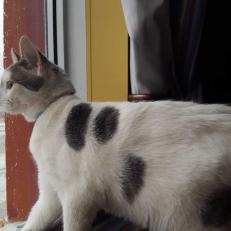 Dexter, le chat