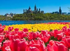 Le Sommet Mondial des tulipes à Ottawa