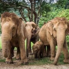 Passer du temps avec les éléphants en Thaïlande