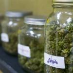 Weeds : une « pharmacie » de cannabis