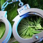 Cannabis : la zone grise